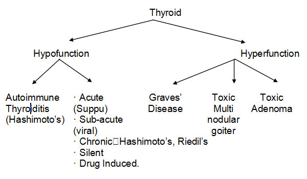 Thyroid Conclude